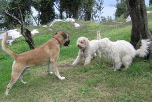 Trüffelsuchhund